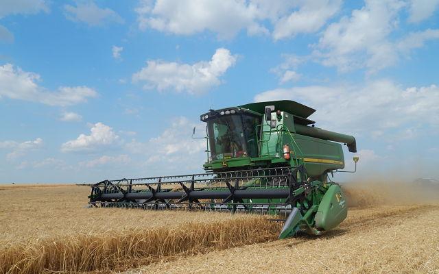 Wheat5